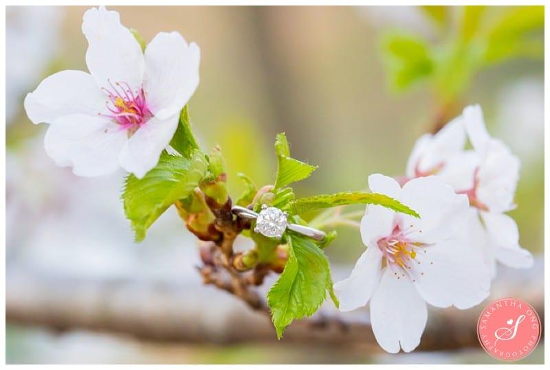 Toronto-High-Park-Cherry-Blossom-Engagement-Ring-Photos-2