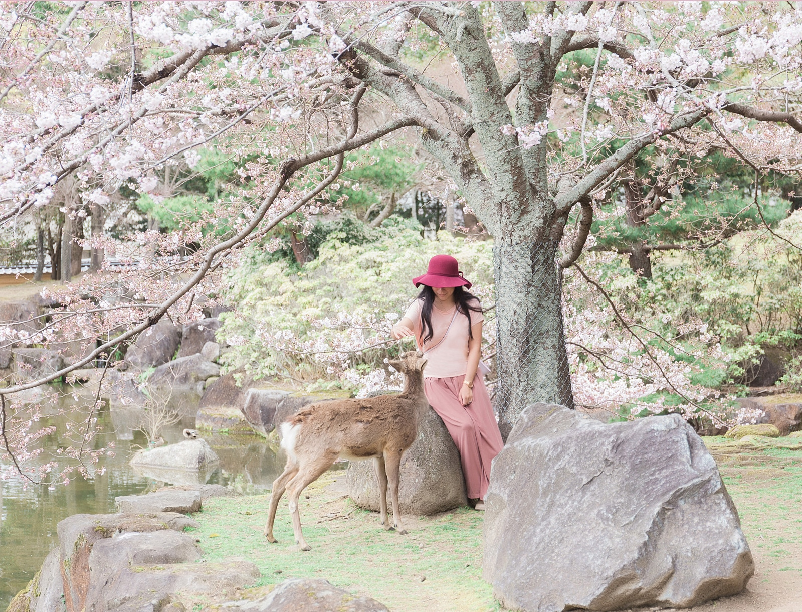 5 Things You Should Know About Visiting Nara, Japan