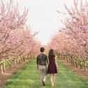 Niagara-Cherry-Blossom-Romantic-Engagement-Photos-2