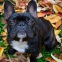 Toronto-Lifestyle-Dog-Pet-Photography-3