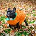 Toronto-Lifestyle-Dog-Pet-Photography-4